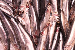Sardines. Freshly caught sardines. La Boqueria market Royalty Free Stock Photos