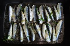 Sardines in a frying pan grilled with spices and rosemary. Tasty and delicious sea food cuisine Royalty Free Stock Photo