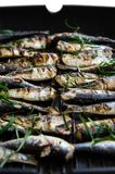 Sardines in a frying pan grilled with spices and rosemary. Tasty and delicious sea food cuisine Royalty Free Stock Images
