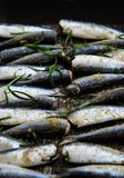 Sardines in a frying pan grilled with spices and rosemary. Tasty and delicious sea food cuisine Stock Images