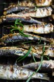 Sardines in a frying pan grilled with spices and rosemary. Tasty and delicious sea food cuisine Royalty Free Stock Photos
