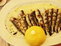 Sardines in Greece. Sandines fresh from brazier in a seaside restaurant in southern Greece, served with 1/2 a lemon Royalty Free Stock Photo