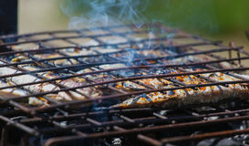 Sardines on grill Stock Photos