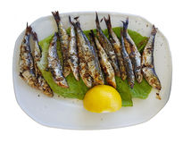 Sardines grilled lemon. Greece Preveza isolated in a plate Royalty Free Stock Photos