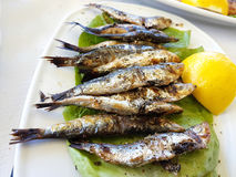 Sardines grilled lemon. Greece Preveza Royalty Free Stock Photography