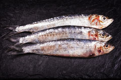Sardines high contrast Royalty Free Stock Image