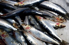 Sardines on ice Royalty Free Stock Photos