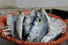 Sardines with ice on plate in Lisbon. Sardines with ice on plate waiting to be prepared in a market stall in Lisbon Stock Photo