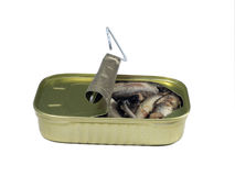 Sardines - Isolated. Can of sardines, metaphor for cramped space, not enough room, too much in too little, insufficent resources etc. Isolated version stock image