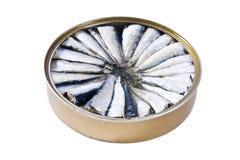 Sardines isolated Stock Photos