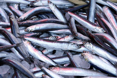 Sardines in a local market Royalty Free Stock Photography
