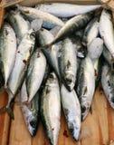 Sardines méditerranéennes Photo stock