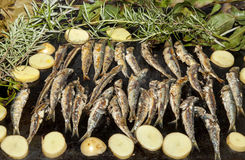 Sardines, Mackerel fishes  with potatoes on grill plate Royalty Free Stock Image