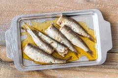 Sardines on the metal plate Stock Image