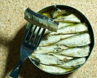 Sardines in oil Royalty Free Stock Images