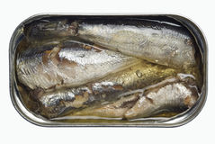 Sardines in oil. Open sardines in oil can Stock Images