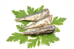 Sardines in olive oil Royalty Free Stock Photos