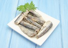 Sardines in olive oil Stock Photos