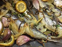 Sardines ,onion and garlic Royalty Free Stock Images