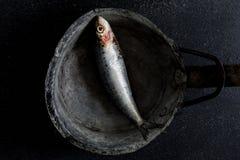 Sardines op donkere achtergrond royalty-vrije stock foto's
