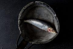 Sardines op donkere achtergrond Royalty-vrije Stock Fotografie