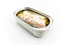 Sardines in opened tin can Stock Images
