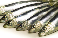 Sardines on plate. Sardines fish on white plate Royalty Free Stock Photography