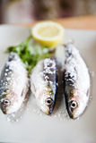 Sardines. Plate with raw sardines and lemon royalty free stock images