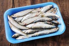 Sardines in polystyrene on wood Stock Photos