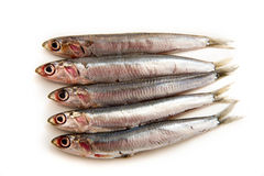 Sardines. Raw Sardines with lemon slice on white plate Royalty Free Stock Images