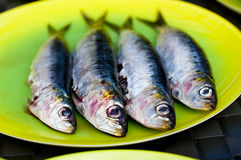 Sardines ready for the BBQ Stock Images