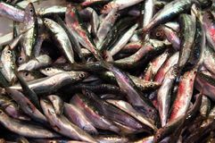 Sardines for sale Royalty Free Stock Images