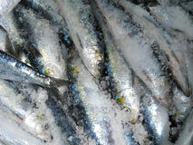 Sardines in salt Royalty Free Stock Images