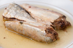 Sardines served on the white plate Stock Photos