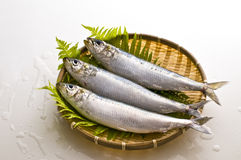 Sardines Royalty Free Stock Images