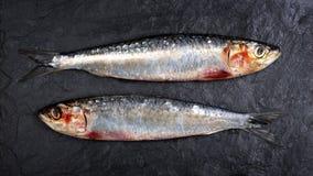 Sardines on slate background Stock Image
