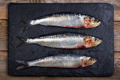 Sardines on slate background Royalty Free Stock Photo