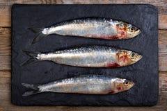 Sardines on slate background. Fresh sardines on black slate board over old wood background Royalty Free Stock Photo