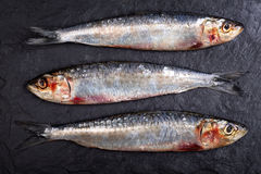Sardines sur le fond d'ardoise Photographie stock libre de droits