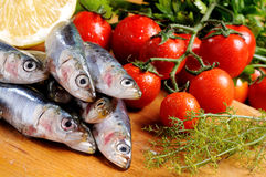 Sardines and tomato Royalty Free Stock Images