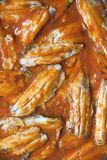 Sardines with tomato sauce Stock Photography