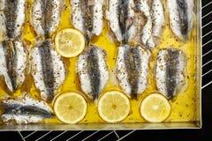 Sardines Stock Photos