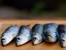 Sardines on wooden background Stock Images