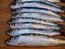 Sardines on wooden background Royalty Free Stock Images