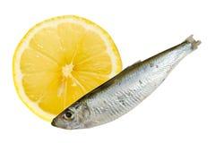 Sardinha com composição do limão Fotografia de Stock Royalty Free