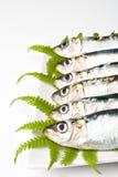 Sardinhas Imagens de Stock