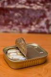 Sardinhas de Springwater em uma lata Imagens de Stock Royalty Free