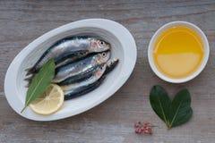 Sardinhas frescas Foto de Stock Royalty Free