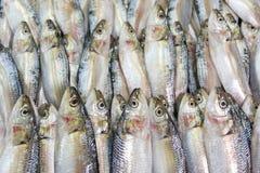 Sardinhas frescas no mercado de peixes Fotografia de Stock Royalty Free