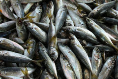 Sardinhas inteiras, frescas no mercado de peixes de Fethiye Fotografia de Stock Royalty Free